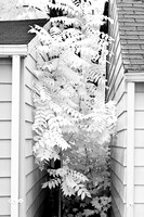 infrared-2008_085